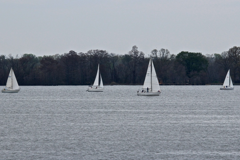Four Sail Boats on Cross Lake